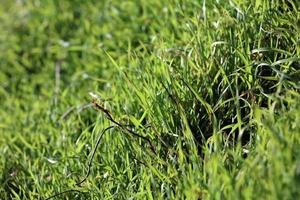 grönt gräs lämnar närbild bakgrund natur skriver ut femtio megapixlar foto