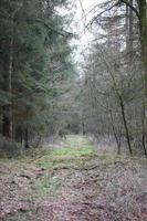 väg i tysk skog bakgrund stock photography högkvalitativa utskrifter foto