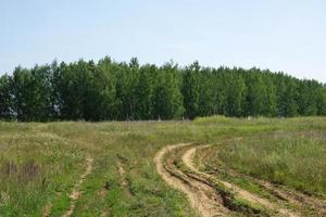 vägen på fältet, går till skogen foto