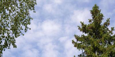trädtoppar i form av en ram foto