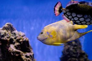 undervattensbild av fisk i havet foto
