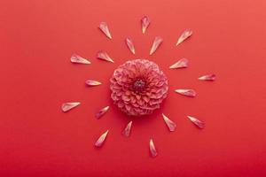 platt låg vackra sortiment blommor foto