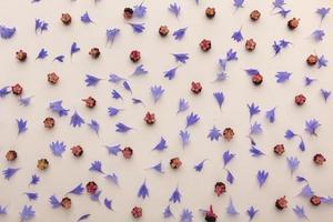 sammansättningen ovanifrån blommar foto