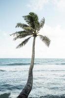 tropiskt hawaiilandskap med bergsutsikt foto