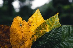 höstlöv i grön skog, väg till skog foto
