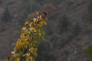 trädgrenar höst foto