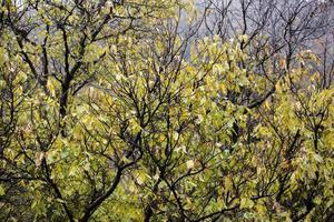 vattendroppar på trädpinnar under höstsäsongen. närbild, grunt skärpedjup foto