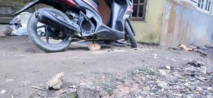 den lilla katten vilar under den röda motorcykeln foto