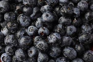 färsk blåbär bakgrund foto