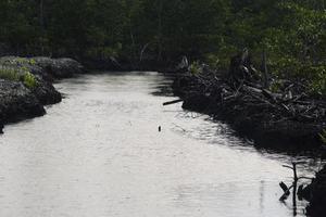mangrover som har skurits och bränts foto