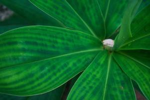 vacker natur gröna tropiska blad trädskog. foto
