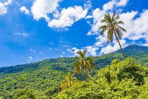 natur med palmer på tropiska ön ilha grande brasilien. foto