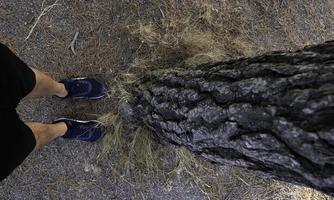 fötter med flip -flops i skogen foto