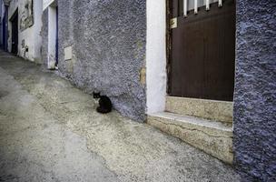 svart katt övergiven på gatan foto