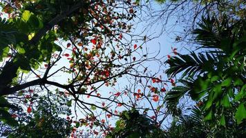 tropiskt grönt blad och blå himmel. hög kontrast foto