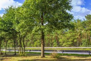 natur och landskap på motorvägen i Tyskland. foto