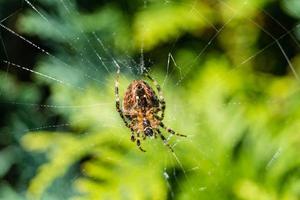 spindel på nätet foto