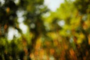 grön bokeh i skogen med solsken. natur abstrakt bakgrund. foto