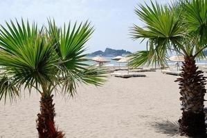 sandstrand med palmer i kalkon, Medelhavet foto