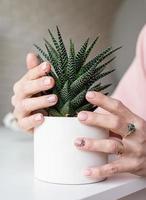 kvinnlig hand med nygjord manikyr som håller en saftig potplant foto