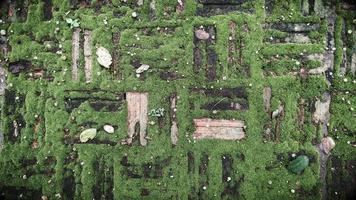 konsistens av gammal tegelsten med grön mossa foto