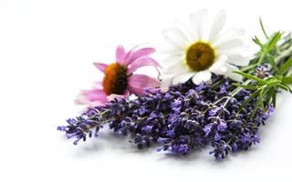lavendel, echinacea och kamomillblommor foto