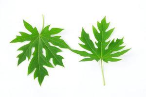 papaya blad isolerad på en vit bakgrund foto
