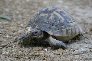 en sköldpadda i staden foto
