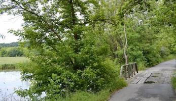 träbro över floden foto