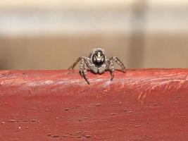 främre makrovy av en spindel foto