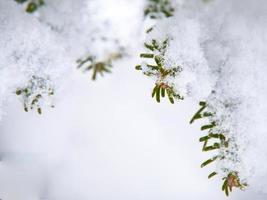 snöflingor som ligger på en vacker torr gren foto