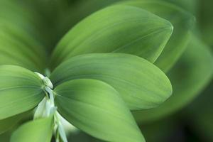 grönt blad, tropiskt lövverk, botanisk bakgrund foto