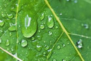 dagg droppar på vackra gröna blad foto