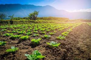 grönsaks trädgård nära bergsfloden på morgonen sommardag. foto