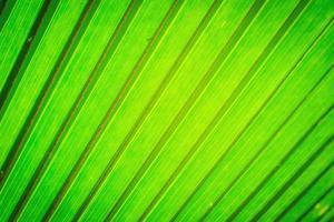 texturbild av grönt blad bakgrund. foto