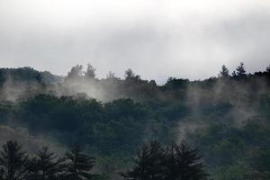 vackert grönt naturskogslandskap foto