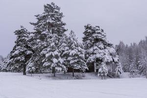hus mitt i stora snöiga tallar. foto