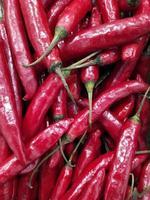 hög med färsk chili foto