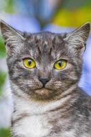 vacker söt katt med gula ögon grön natur bakgrund minsk. foto