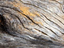 textur av gammal stubbe trä yta foto