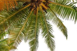 nedifrån och upp grönt tropiskt palmblad foto