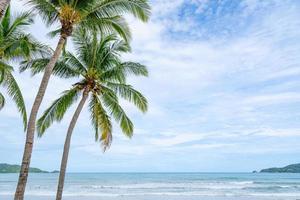 phuket patong beach sommarstrand med palmer foto