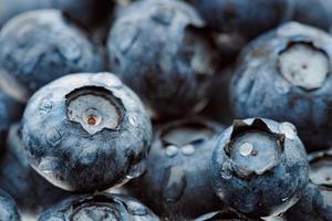 nyplockade blåbär, närbild foto