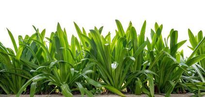 isolerade gröna blad på vit bakgrund foto