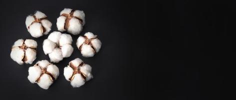 bomullsblommor isolerade på svart bakgrund. foto