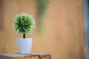 växter i krukor på träbordet foto