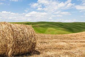 Toscana jordbruk i Italien foto