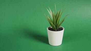 konstgjorda kaktusväxter eller plast eller falska träd på grön bakgrund. foto
