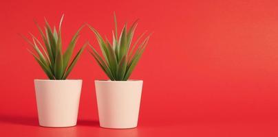två konstgjorda kaktus- eller plastväxter eller falska träd på röd bakgrund. inga människor foto