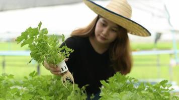 unga asiatiska kvinnliga bönder som inspekterar hydroponiska grönsakstomter i växthus, ekologiska grönsaker, smart gård. foto
